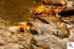 Il fiume Treja