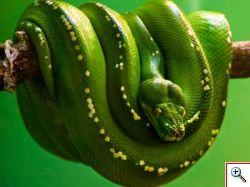 REPTILIA EXPO: l'affascinante mondo dei rettili a BORMIO dal 15 al 22 Agosto