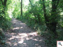 Sentiero - Parco del Treja